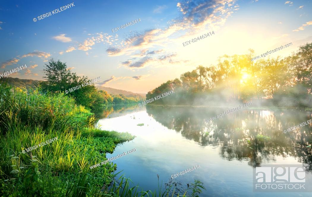 Stock Photo: Green reeds by the river in the morning.