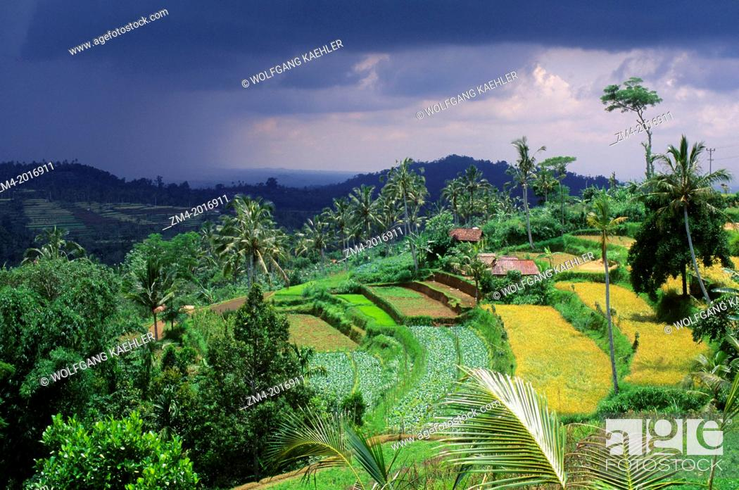 Stock Photo: INDONESIA, BALI, NEAR LAKE BRATAN, VEGETABLE FIELDS IN HIGHLANDS, DARK RAIN CLOUDS.