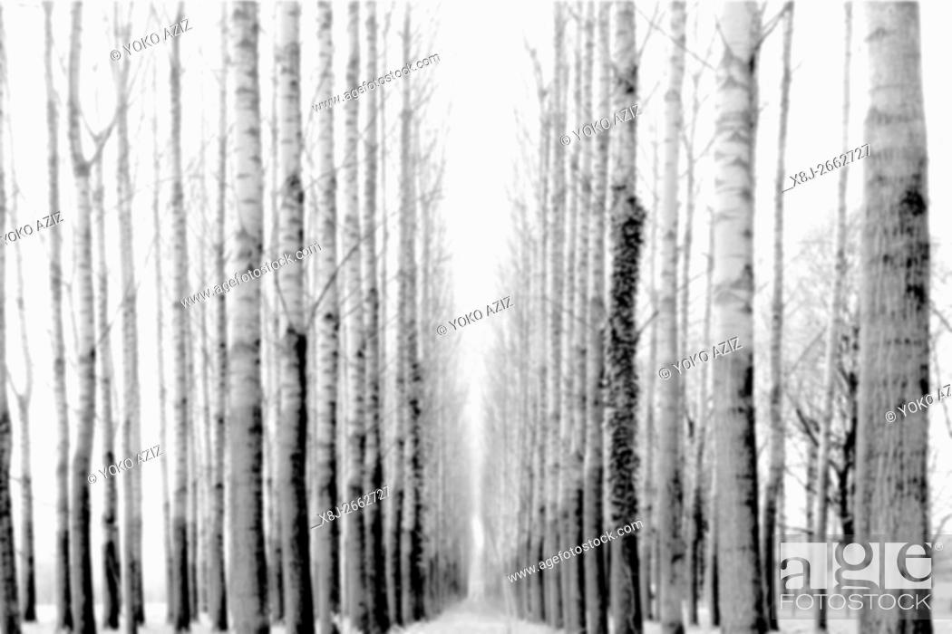 Imagen: Switzerland, Canton Ticino, Gudo, Tree.