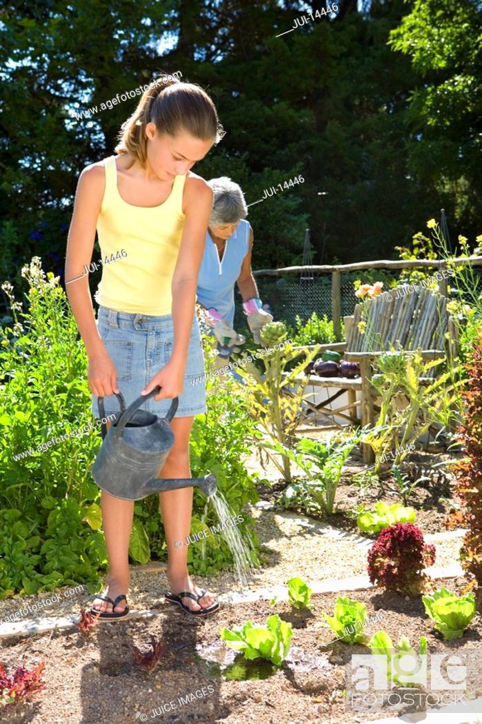 Stock Photo: Girl 10-12 gardening with grandmother.