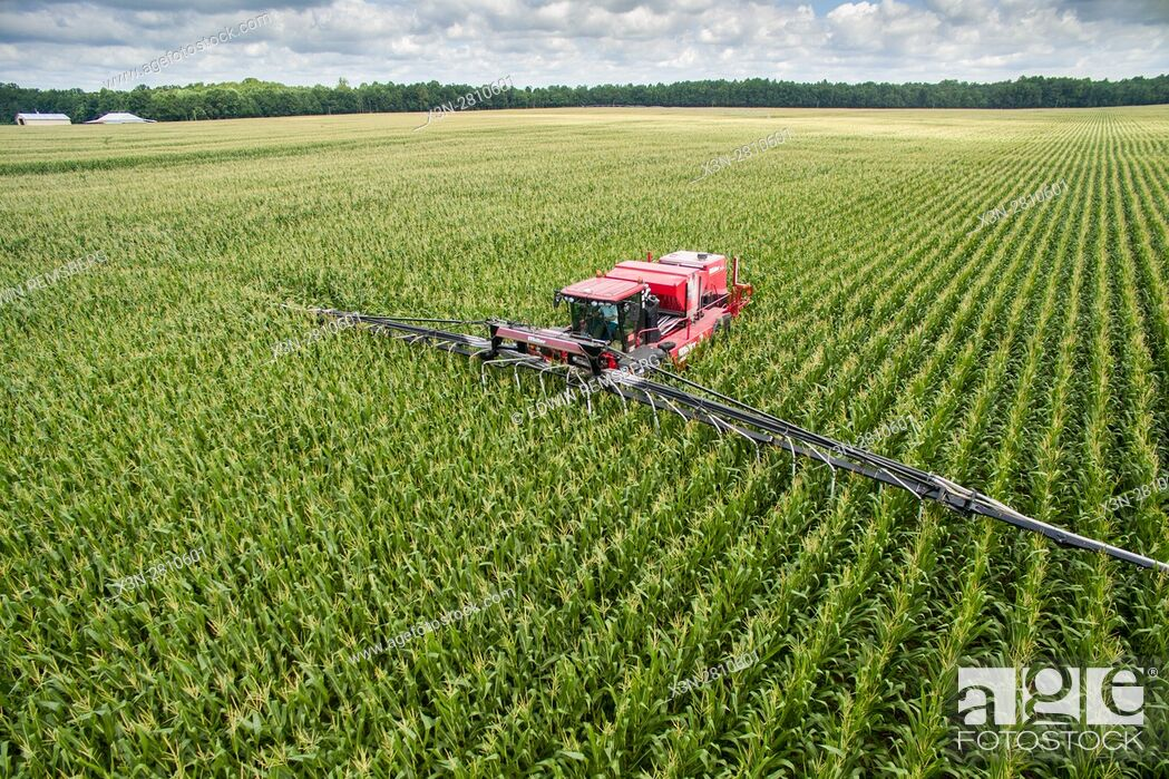 Imagen: An aerial view of an air seeder working its way through rows and fields of cover crops, turning these crops into corn.