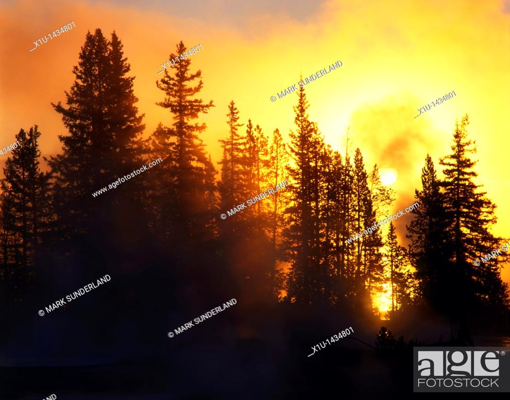 Stock Photo: Backlit Trees at Sunrise West Thumb Yellowstone National Park USA.