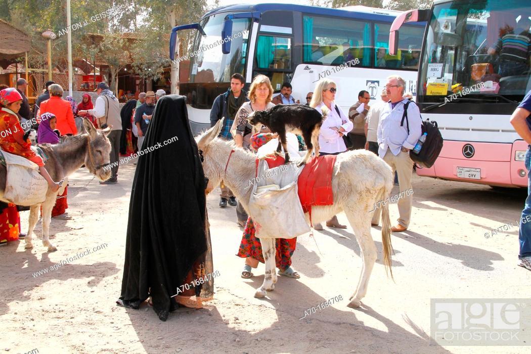 Stock Photo: Donkey , street scene , tourism , egyptian.