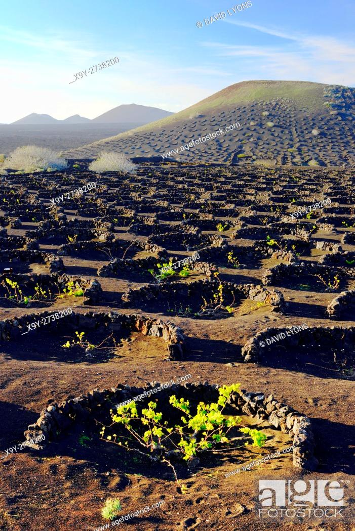 Stock Photo: Lanzarote, Canary Islands. Traditional cinder rock wind shelter walls protect grape vines in volcanic landscape around La Geria.