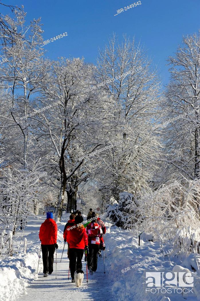 Imagen: Hikers in winter, Kräuter-Erlebnis-Park herb theme park, Bad Heilbrunn, Loisachtal, Tölzer Land, Upper Bavaria, Germany, Europe.