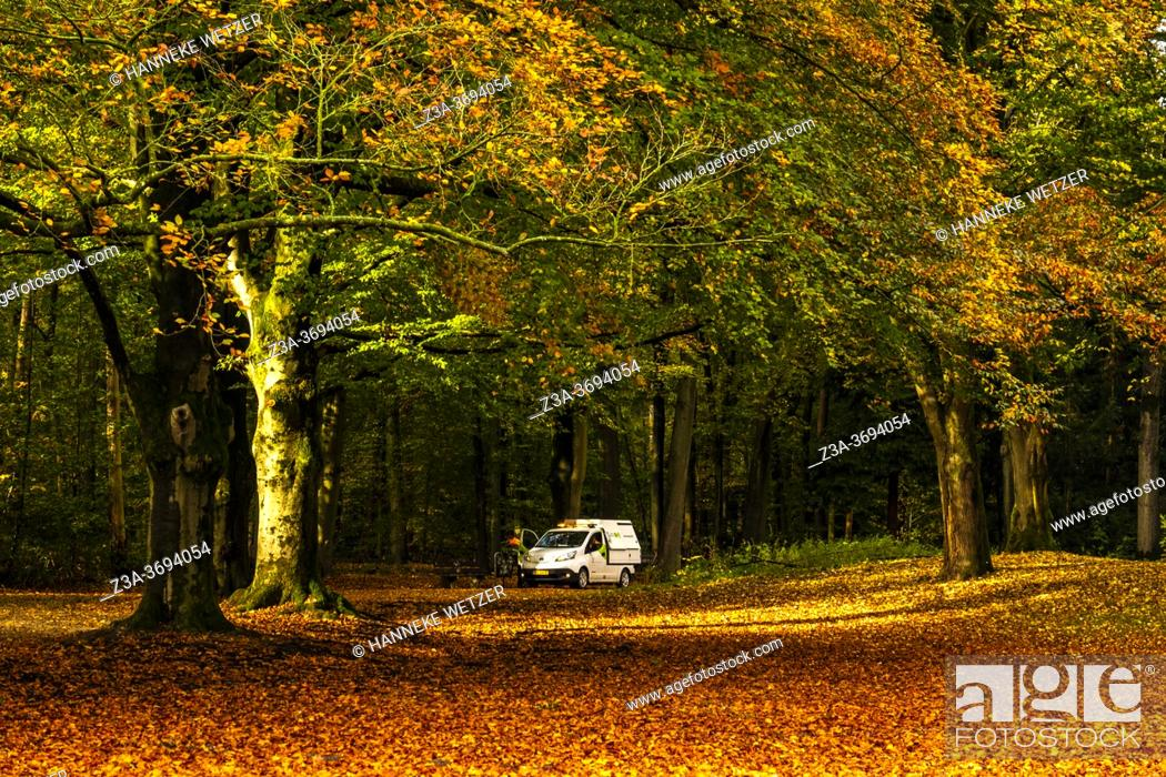 Stock Photo: Maintenance car in a colorful autumn forest in the Netherlands, Europe.
