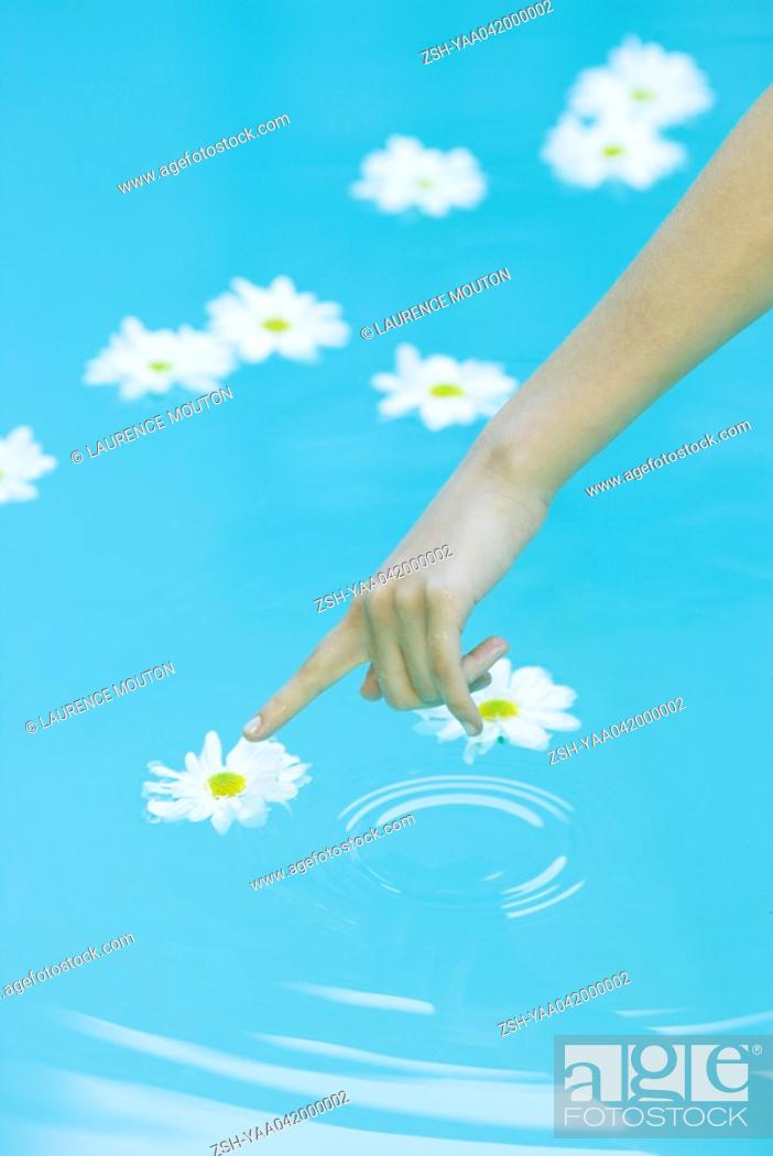 Stock Photo: Young woman touching flower floating on surface of water, cropped view.