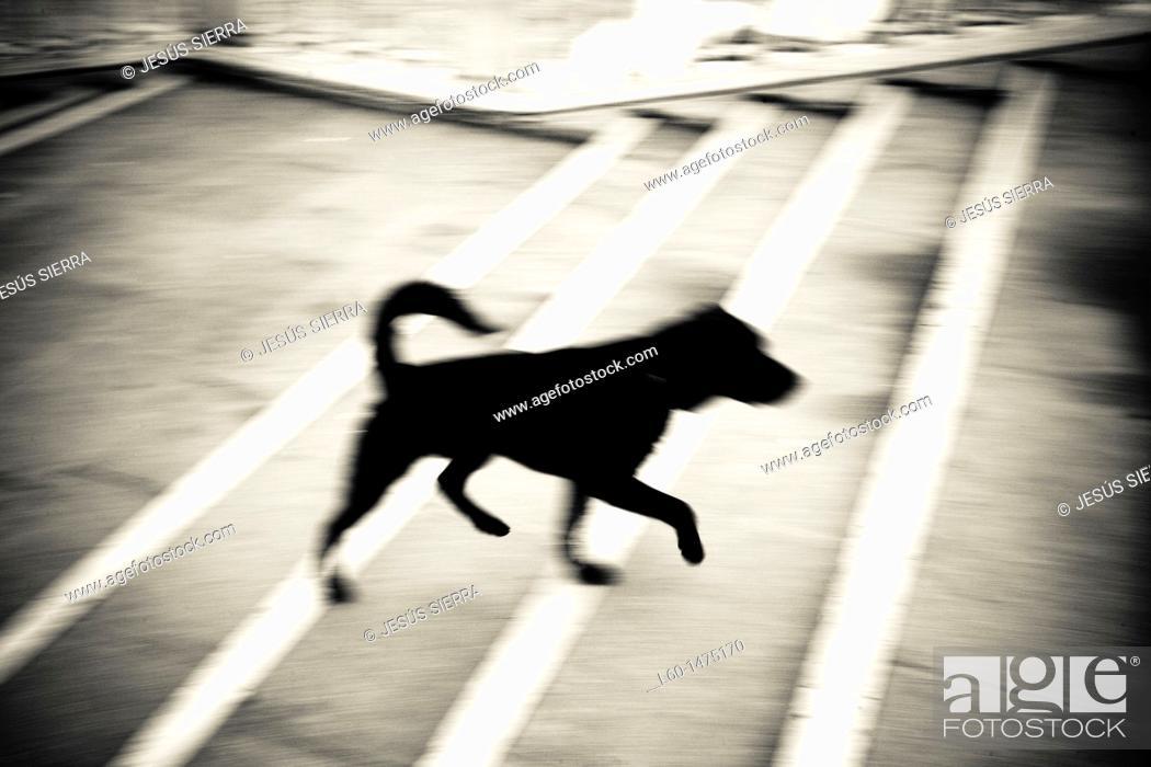 Stock Photo: Dog in Venice, Veneto, Italy.