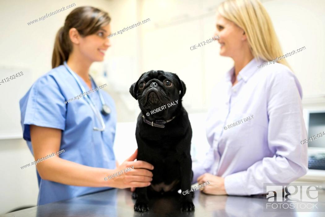 Stock Photo: Veterinarian and owner discussing dog in vet's surgery.