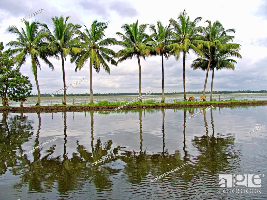 Stock Photo: Reflection of coconut palm trees at backwaters, Alleppey, Kerala, India.
