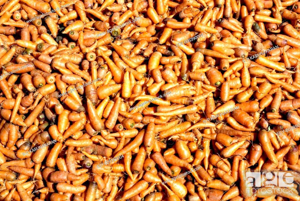 Stock Photo: Carrot daucus carota ; Cumbum or Kambam ; Tamil Nadu ; India 03-02-2009.