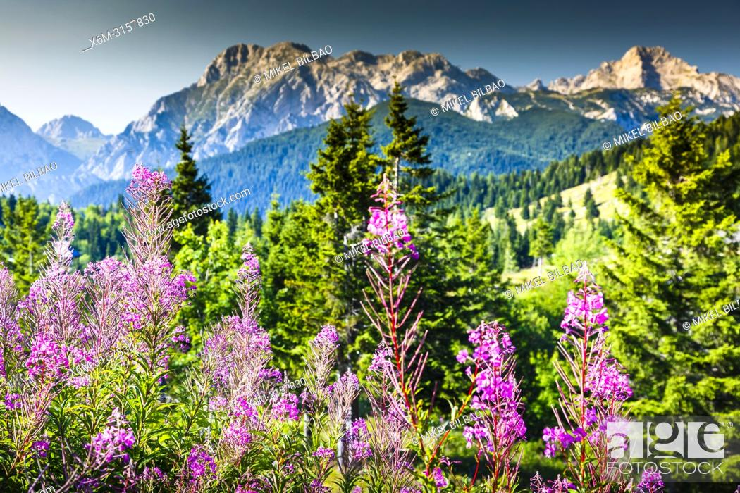Imagen: Mountains in summer with flowers. Velika Planina sky area. Upper Carniola region. Slovenia, Europe.