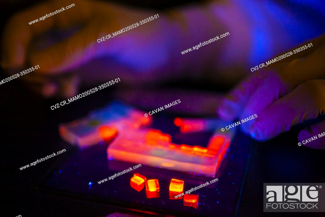 Imagen: Technician conducts biomass energy DNA research conducted in lab.
