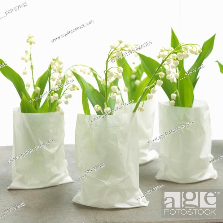 Stock Photo: lilies of the valley in white paper bags.