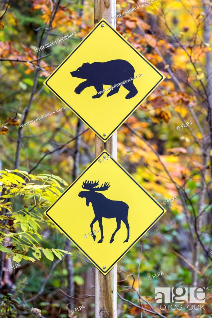 Stock Photo: road sign warning of bears and moose crossing, Jacques-Cartier National Park, province Quebec, Canada, October.