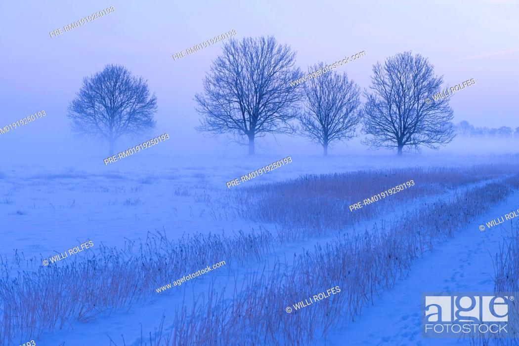 Imagen: Winter landscape, Vechta district, Niedersachsen, Germany / Winterlandschaft, Landkreis Vechta, Niedersachsen, Deutschland.