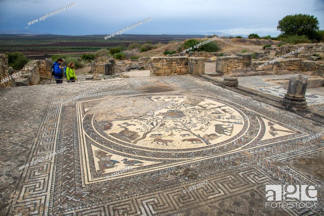 Stock Photo: ruins at roman Volubilis in Maroc.