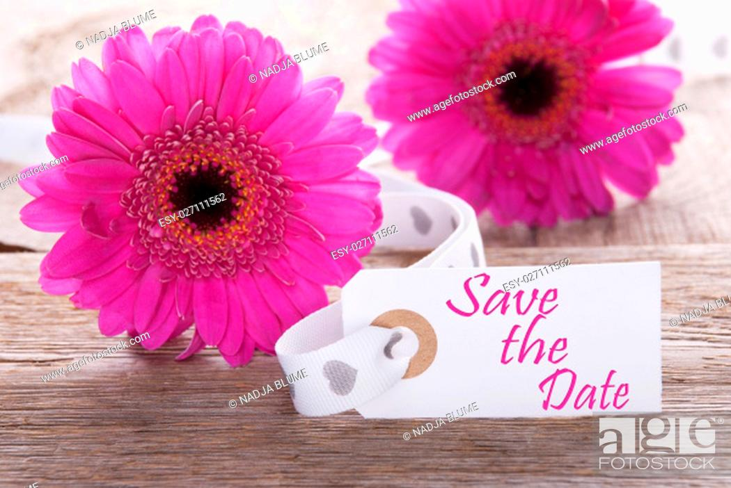 Stock Photo: Label With English Text Save The Date. Pink Spring Gerbera Blossom. Vintage, Rutic Or Aged Wooden Background. Card For Spring Greetings.