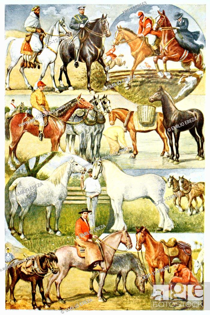 Imagen: Horses  Antique illustration  1920.