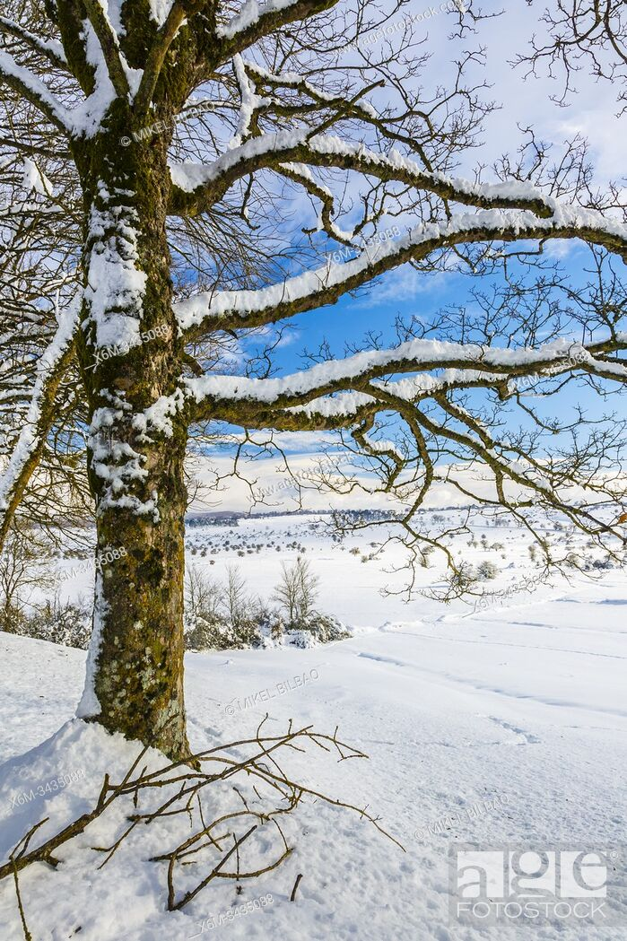 Photo de stock: Trees in a snow-covered landscape. Urbasa-Andia Natural Park. Navarre, Spain, Europe.