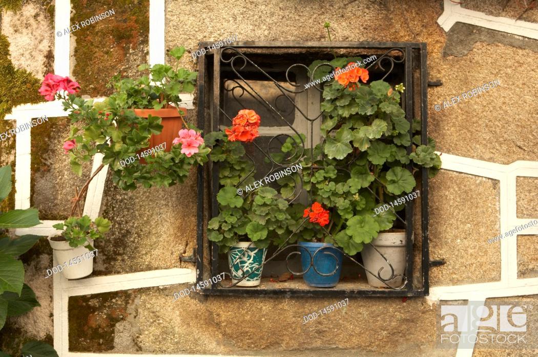 Stock Photo: Spain, Galicia, Castro Caldelas, Ourense, Pot plants on window.