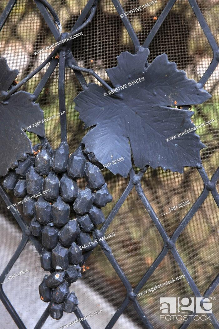 Stock Photo: Gray iron leaf and grapes at fence.
