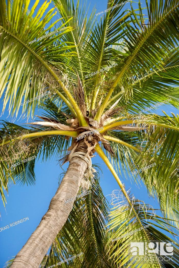 Imagen: Palm tree against clear sky, Koh Pha Ngan, Thailand.