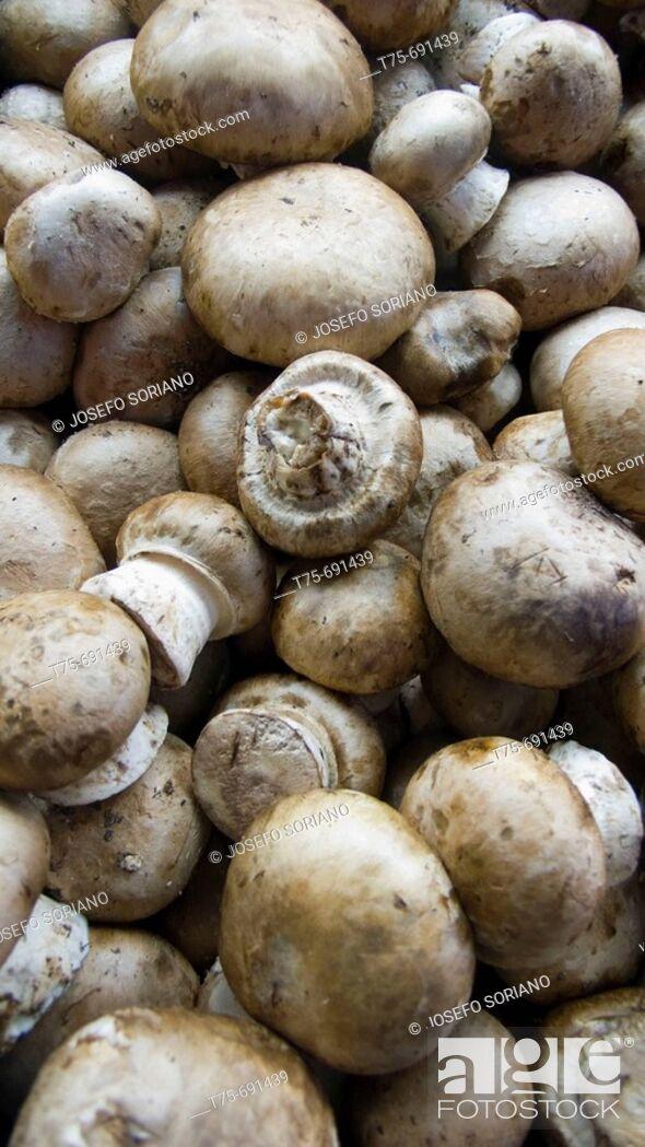 Stock Photo: 'Portobello' mushrooms.