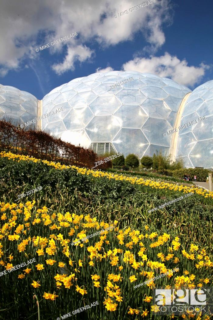 Imagen: Daffodils in bloom at the Eden Project, St Austell, Cornwall, UK.