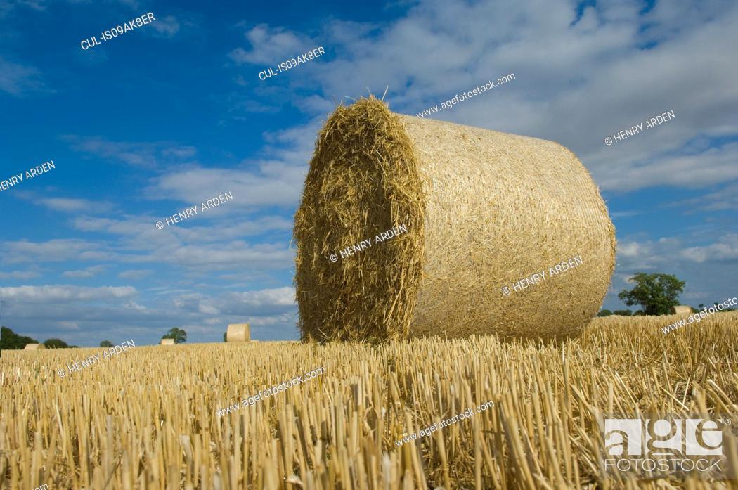 Stock Photo: Bale of hay.