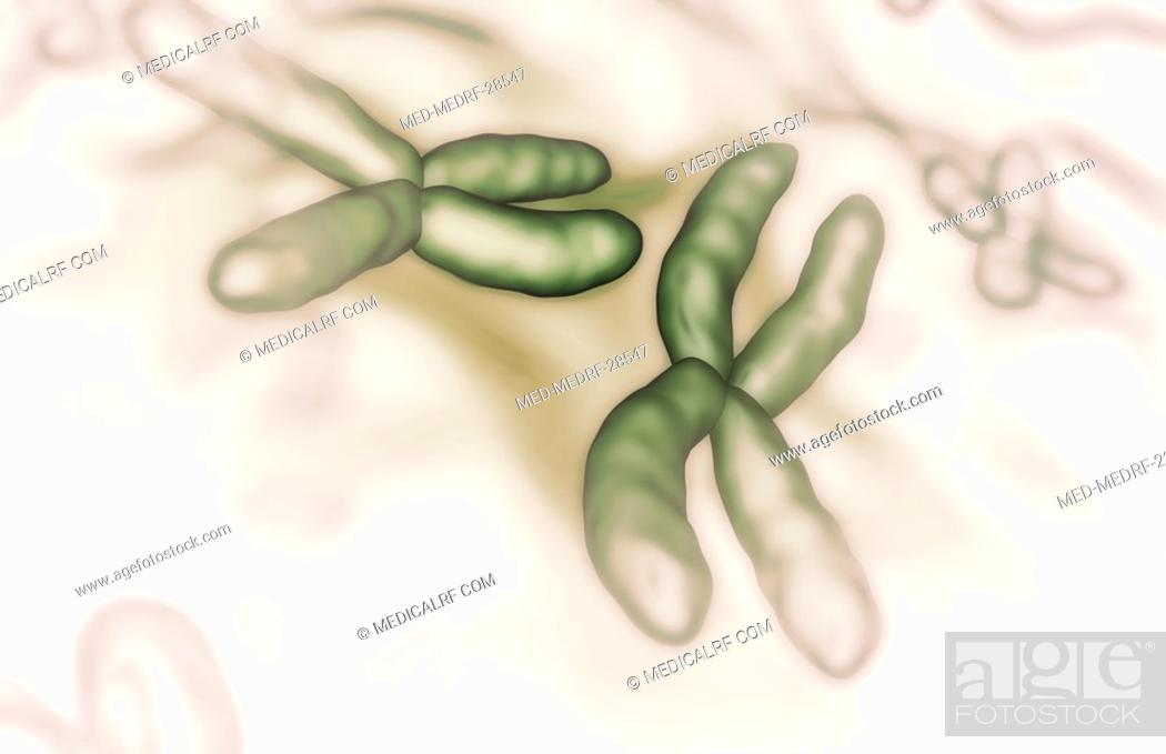 Stock Photo: Chromosomes.