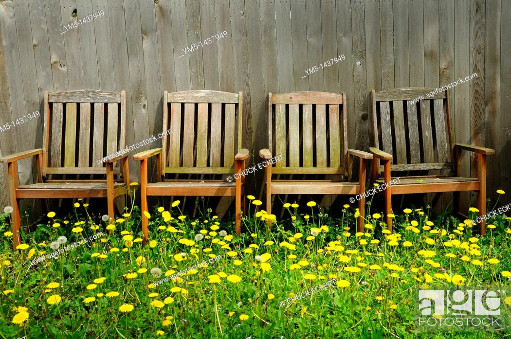 Stock Photo: Backyard dandelions and chairs.