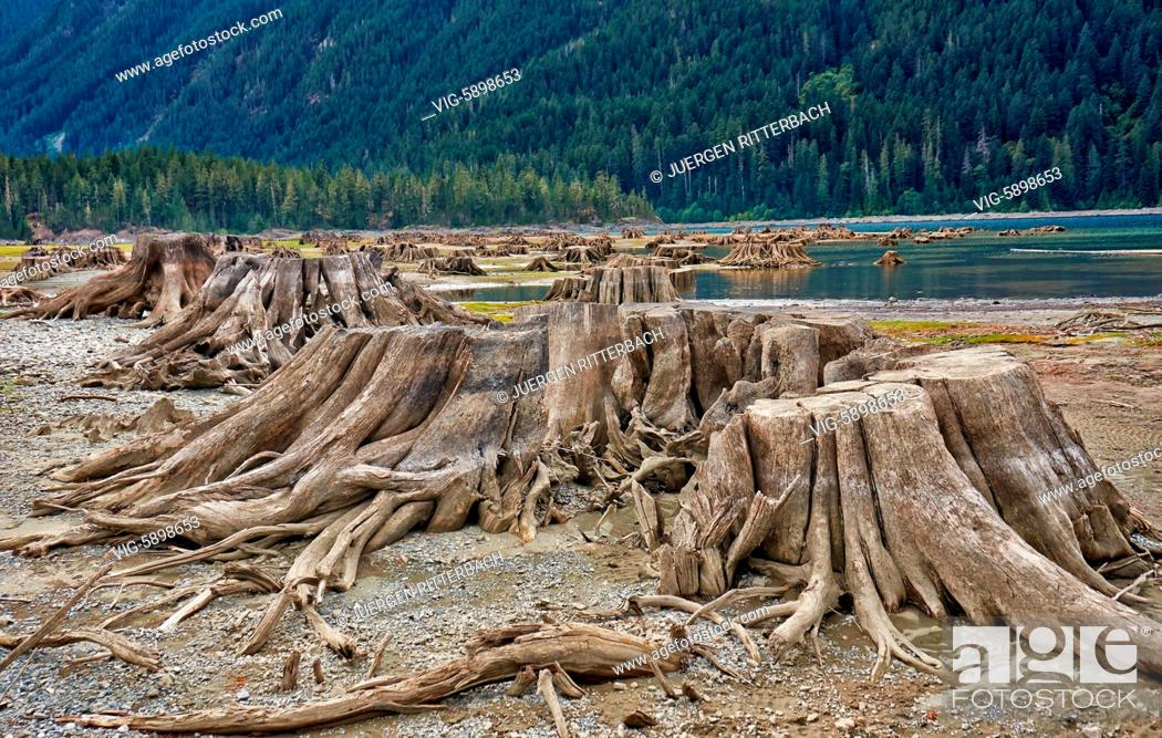 Imagen: Buttle Lake in Strathcona Provincial Park, Vancouver Island, British Columbia, Canada - Vancouver Island, British Columbia, Canada, 19/09/2014.