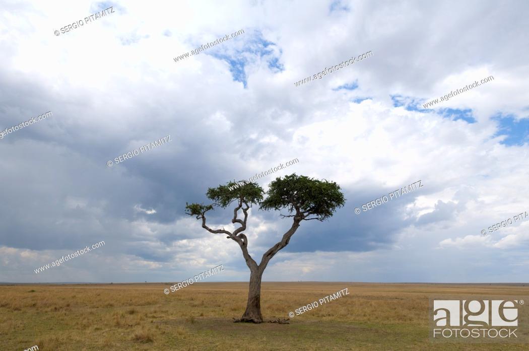 Stock Photo: Masai Mara, Kenya.