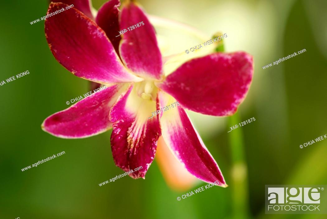 Stock Photo: Orchid Garden, Kuching, Malaysia.