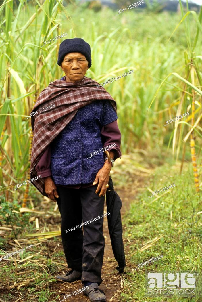 Stock Photo: man walking on a path through the sugar cane fields, Sumatra island, Republic of Indonesia, Southeast Asia and Oceania.