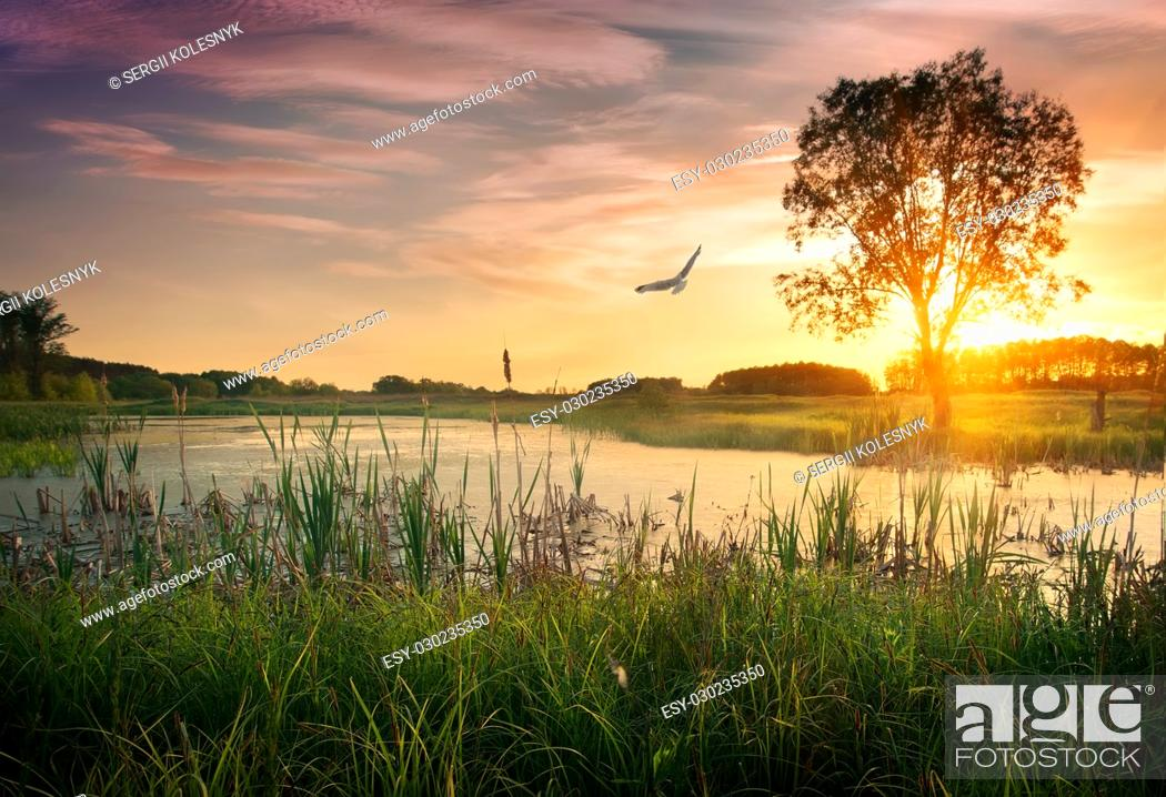 Stock Photo: Dusk over calm river in summer woodland.