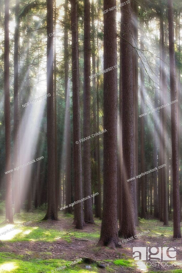 Stock Photo: autumn forest scene with sun-rays shining through branches.