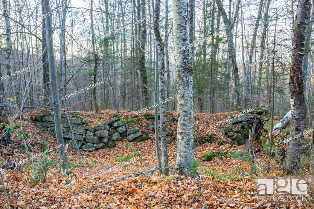 Stock Photo: An abandoned cellar hole along the old East Road in Benton, New Hampshire USA. This road is located off the North and South Road (now Long Pond Road) Road.