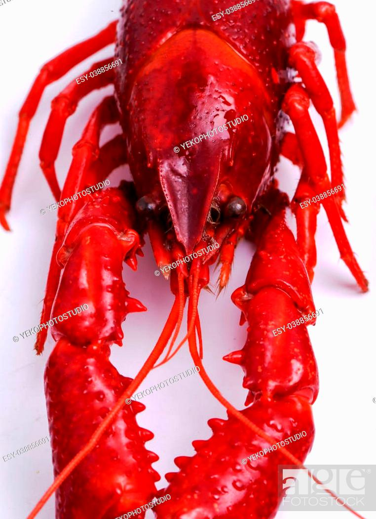 Stock Photo: Food. Delicious crayfish on a white background.
