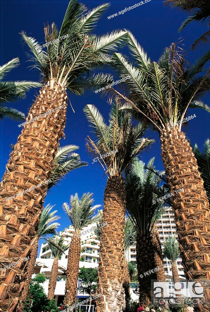 Stock Photo: Israel, Eilat, palm trees.