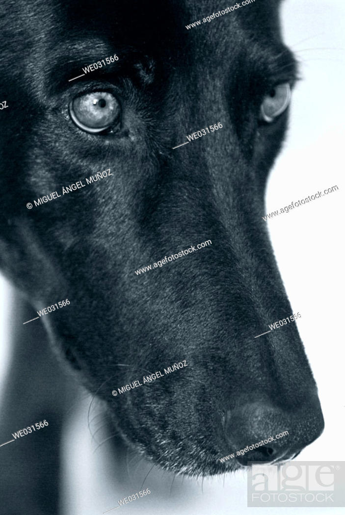 Stock Photo: Animal.