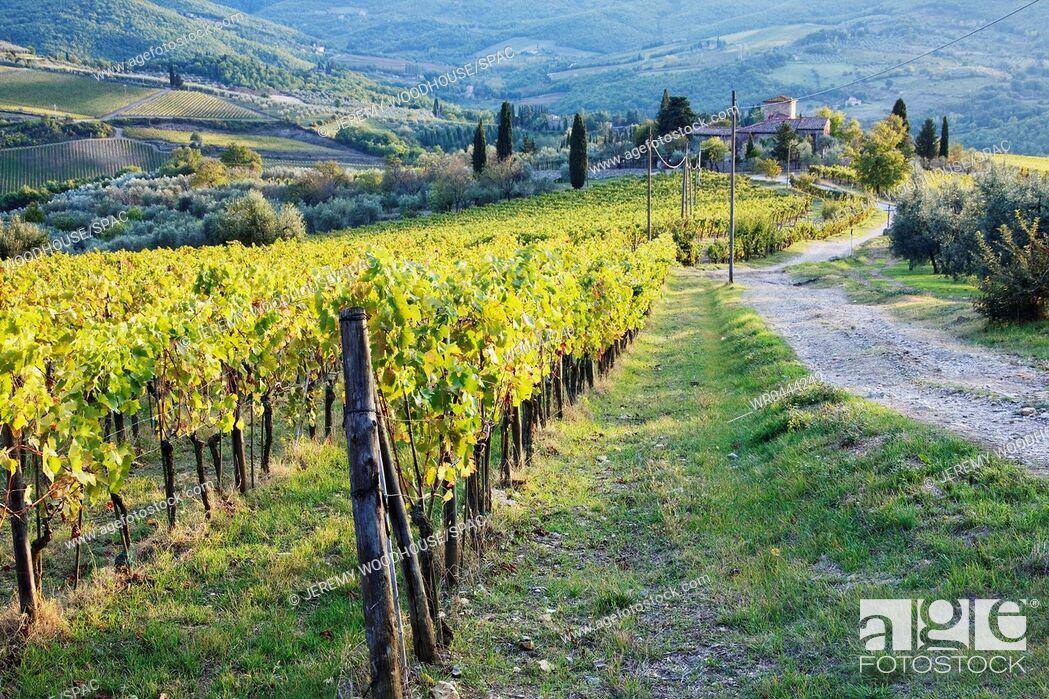 Imagen: Vineyards and Farmhouse.