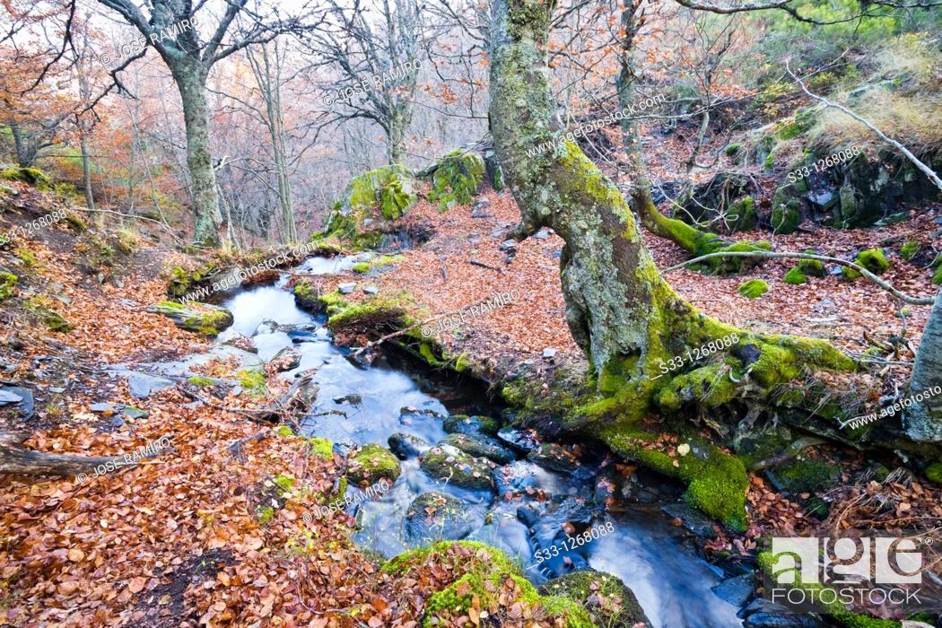 Stock Photo: The Zarza stream Guadalajara Castilla la Mancha Spain.