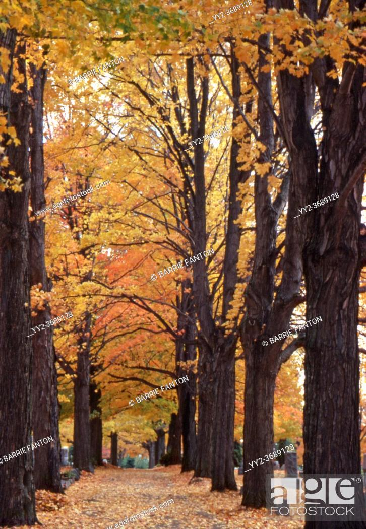 Imagen: Autumn Leaves, Pathway in Cemetery, Wellsville, New York, USA.