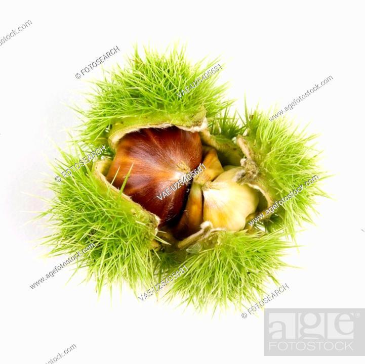Stock Photo: autumn, dornig, chestnut, ball, alfred.
