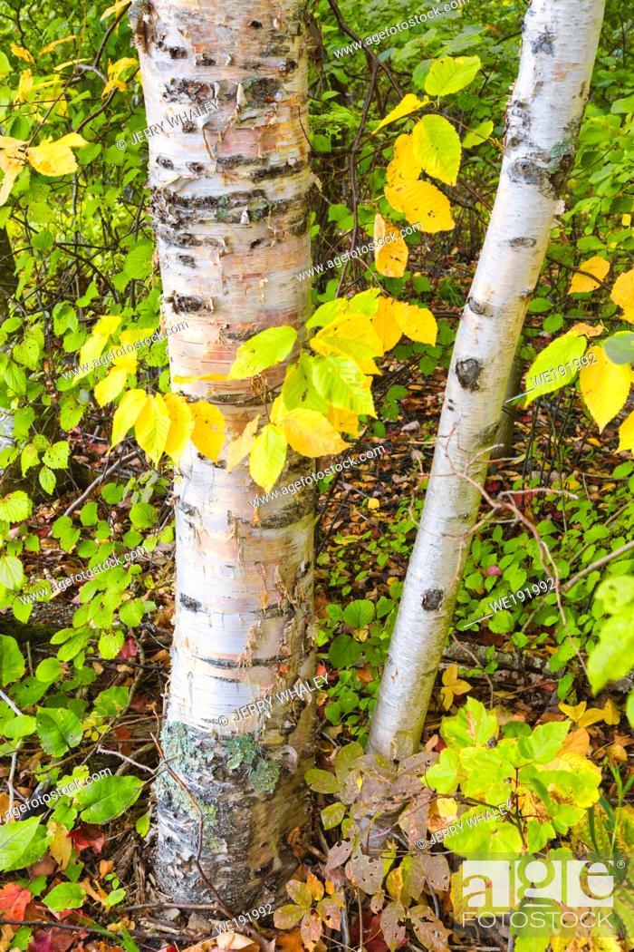 Stock Photo: Sieur de Monts Nature Center Area in Acadia National Park, Mount Desert Island, Maine.
