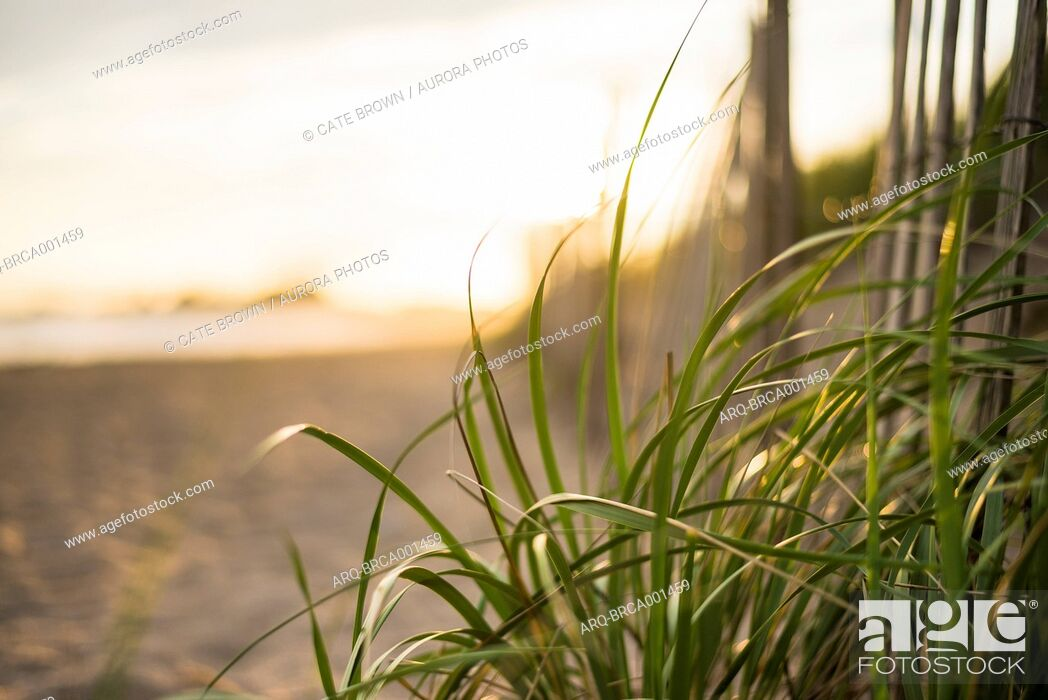 Stock Photo: Sunset details from the beach in Rhode Island.