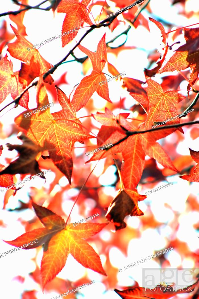 Stock Photo: Autumn landscape.