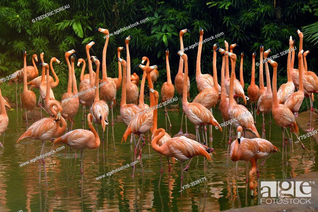 Stock Photo: Pink flamingoes, Jurong Bird Park, Singapore.